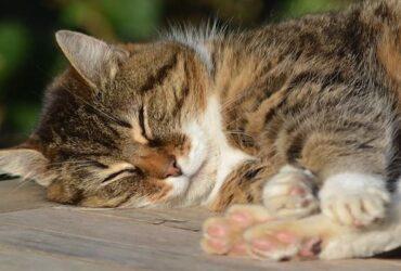 自律神經失調讀者:我都睡不到8小時怎麼辦?