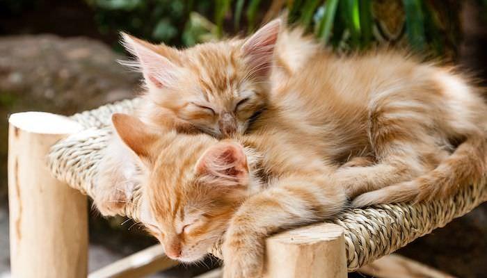 完整睡前儀式大公開,讓你的自律神經啟動睡眠模式恢復平衡