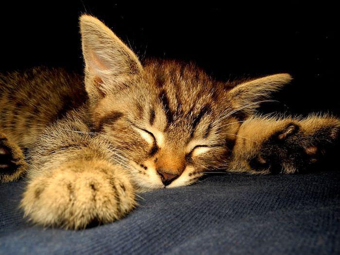 【自律神經失調】【失眠】接受治療後變得很嗜睡,是藥物副作用還是因為長期沒睡好?
